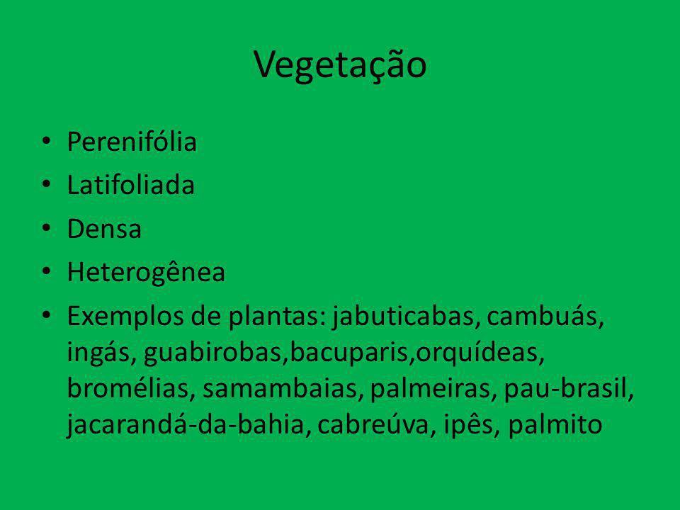 Vegetação Perenifólia Latifoliada Densa Heterogênea Exemplos de plantas: jabuticabas, cambuás, ingás, guabirobas,bacuparis,orquídeas, bromélias, samam
