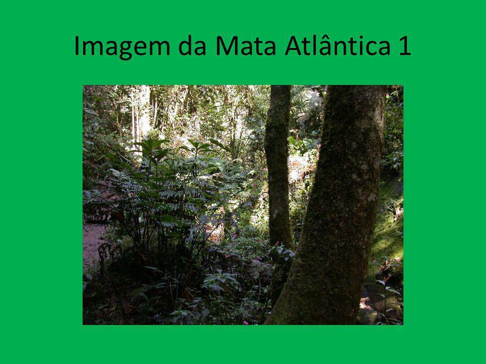 Fauna da Mata Atlântica Fauna - Exemplos de espécies animais da Mata Atlântica: - Mico-leão-dourado(risco de extinção) - Tamanduá bandeira (risco de extinção) - Tatu-canastra (risco de extinção) - Arara-azul-pequena (risco de extinção) - Muriqui - Anta - Onça Pintada (risco de extinção) - Jaguatirica - Capivara