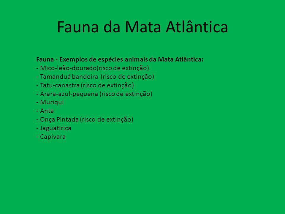 Fauna da Mata Atlântica Fauna - Exemplos de espécies animais da Mata Atlântica: - Mico-leão-dourado(risco de extinção) - Tamanduá bandeira (risco de e
