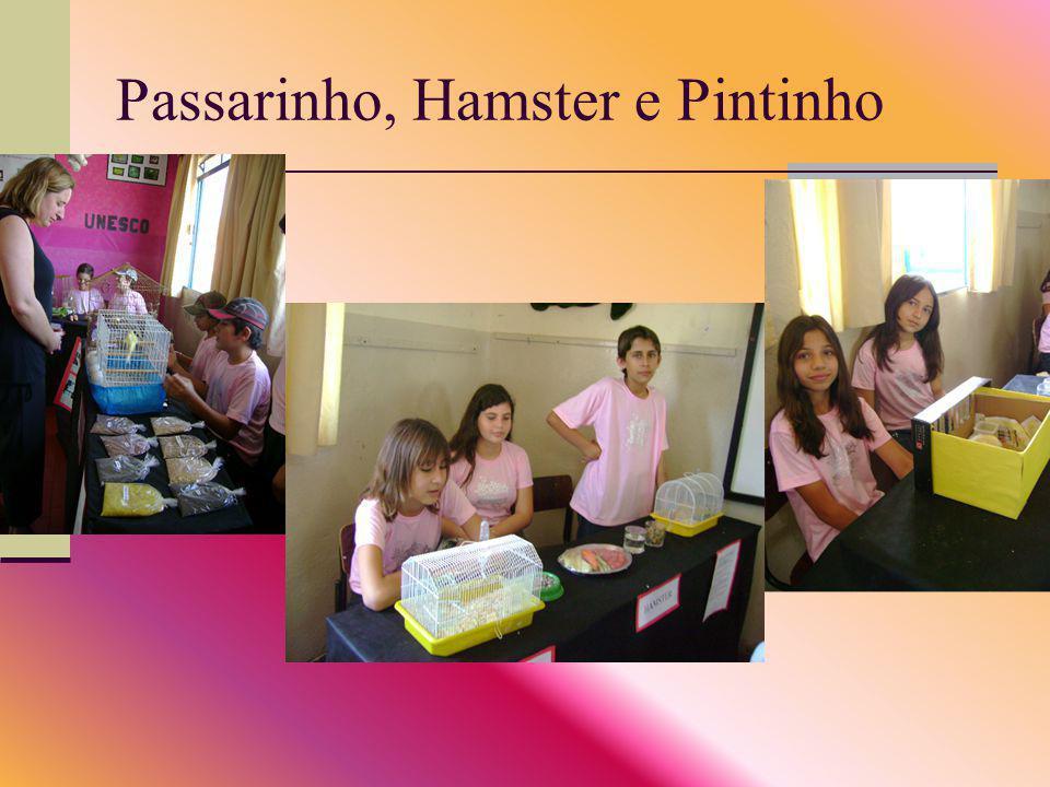 Passarinho, Hamster e Pintinho