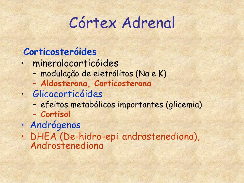 Córtex Adrenal Corticosteróides mineralocorticóides –modulação de eletrólitos (Na e K) –Aldosterona, Corticosterona Glicocorticóides –efeitos metabólicos importantes (glicemia) –Cortisol Andrógenos DHEA (De-hidro-epi androstenediona), Androstenediona