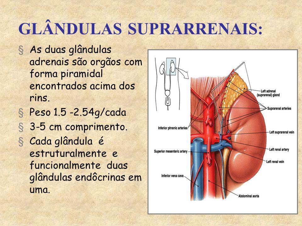 GLÂNDULAS SUPRARRENAIS: §As duas glândulas adrenais são orgãos com forma piramidal encontrados acima dos rins.