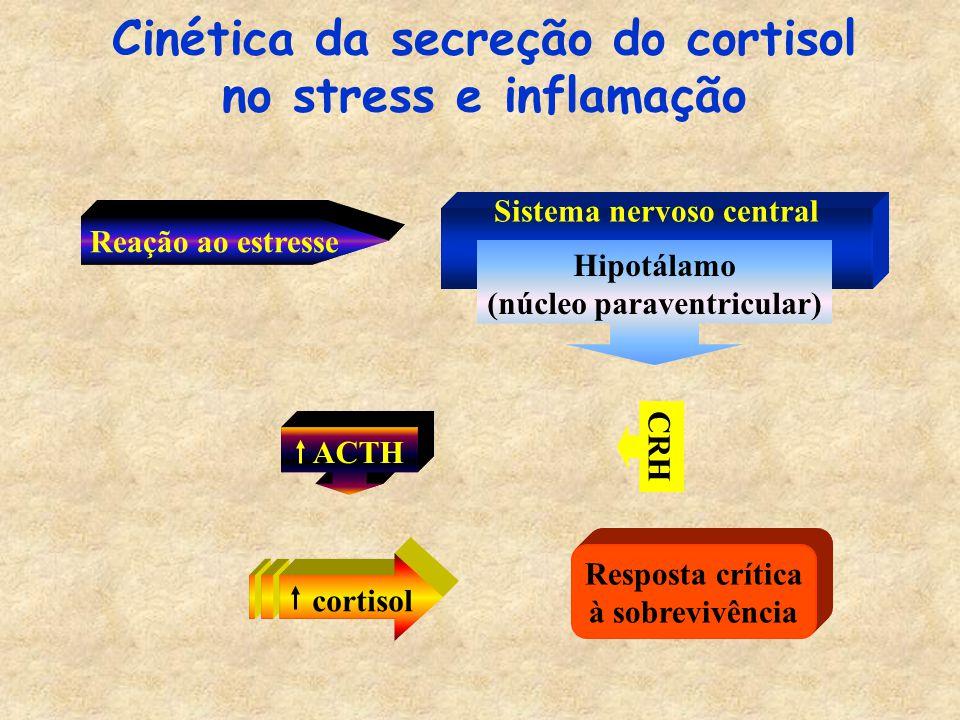 Reação ao estresse Cinética da secreção do cortisol no stress e inflamação ACTH Resposta crítica à sobrevivência CRH Sistema nervoso central Hipotálamo (núcleo paraventricular) cortisol