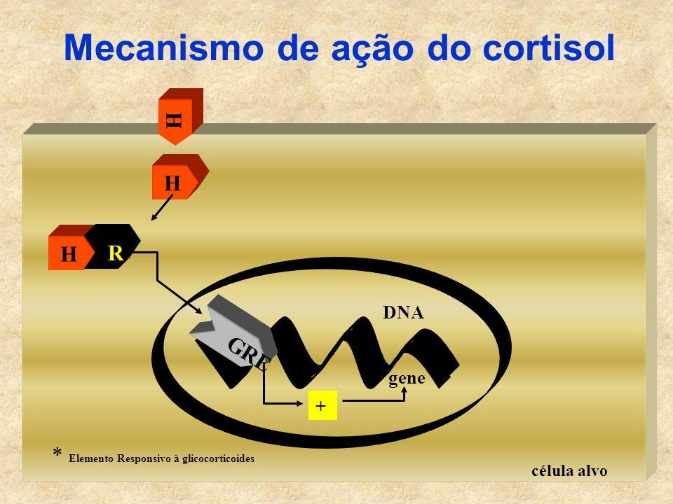 célula alvo Mecanismo de ação do cortisol H H R H gene + DNA GRE * Elemento Responsivo à glicocorticoides