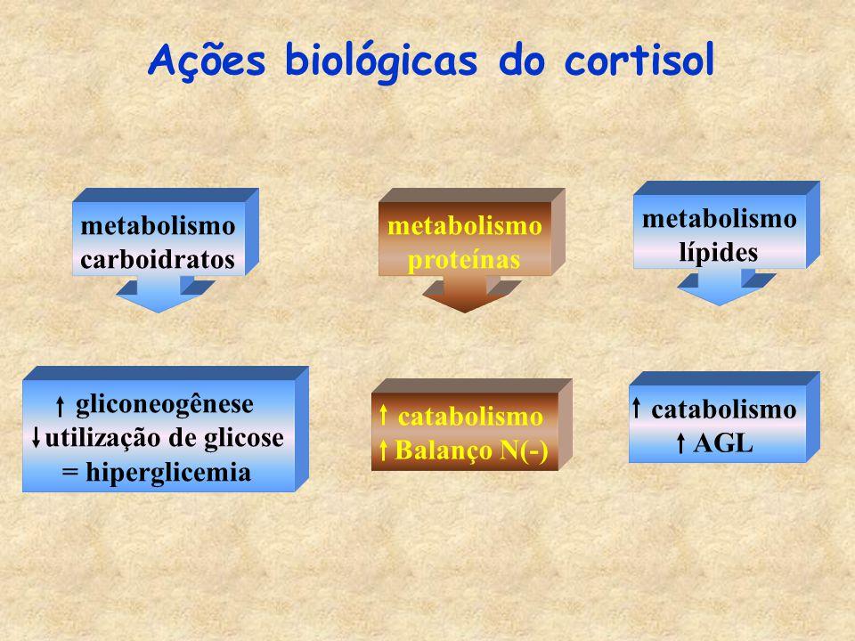 Ações biológicas do cortisol metabolismo carboidratos gliconeogênese utilização de glicose = hiperglicemia metabolismo proteínas catabolismo Balanço N(-) metabolismo lípides catabolismo AGL