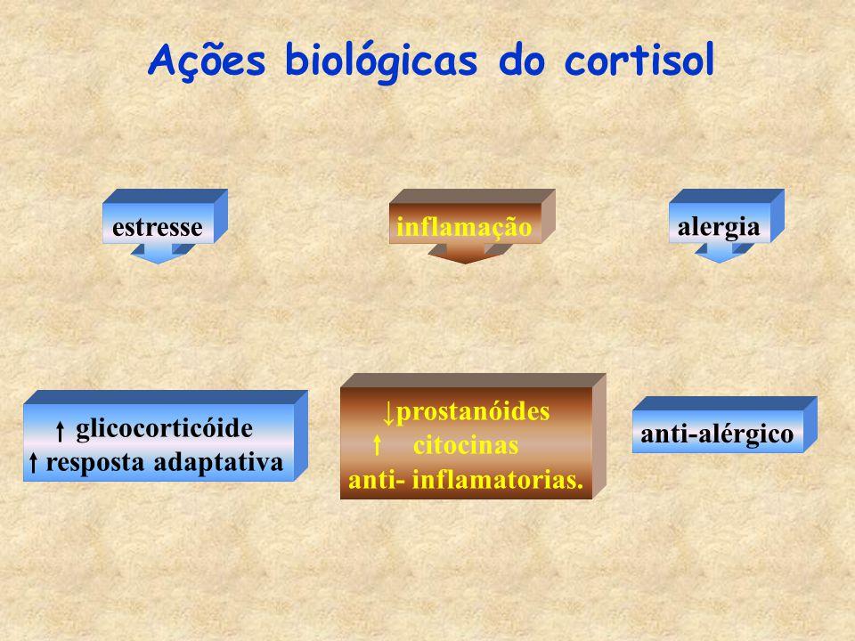 Ações biológicas do cortisol estresseinflamação ↓ prostanóides citocinas anti- inflamatorias.