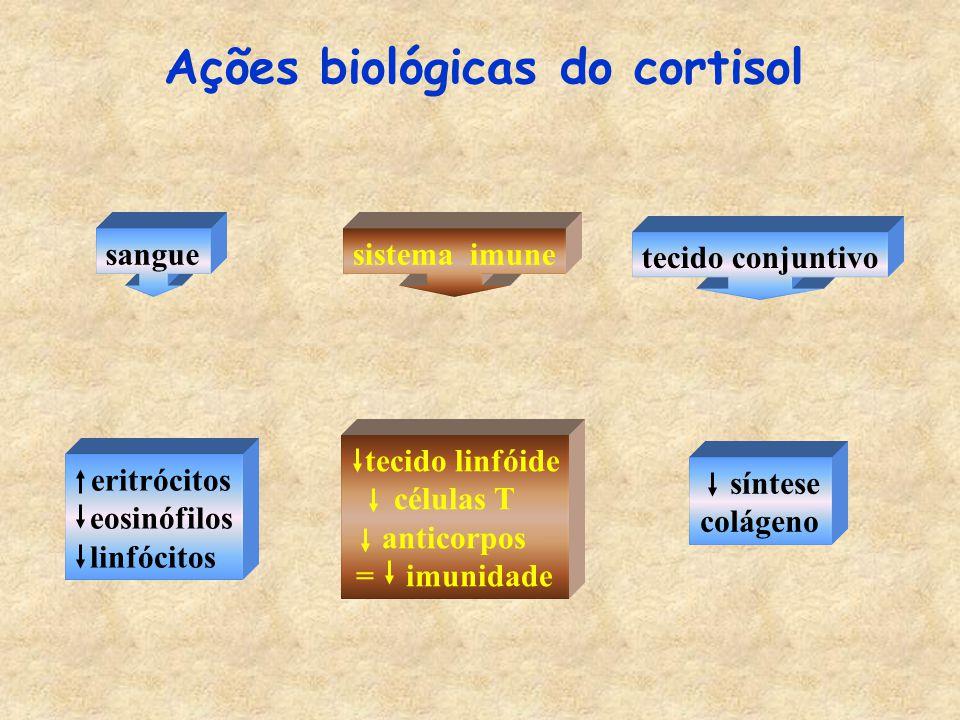 Ações biológicas do cortisol sanguesistema imune eritrócitos eosinófilos linfócitos tecido linfóide células T anticorpos = imunidade tecido conjuntivo síntese colágeno