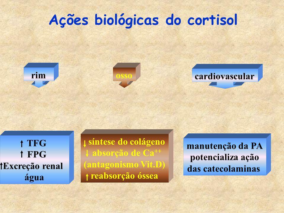 Ações biológicas do cortisol rimosso cardiovascular manutenção da PA potencializa ação das catecolaminas TFG FPG Excreção renal água síntese do colágeno absorção de Ca ++ (antagonismo Vit.D) reabsorção óssea