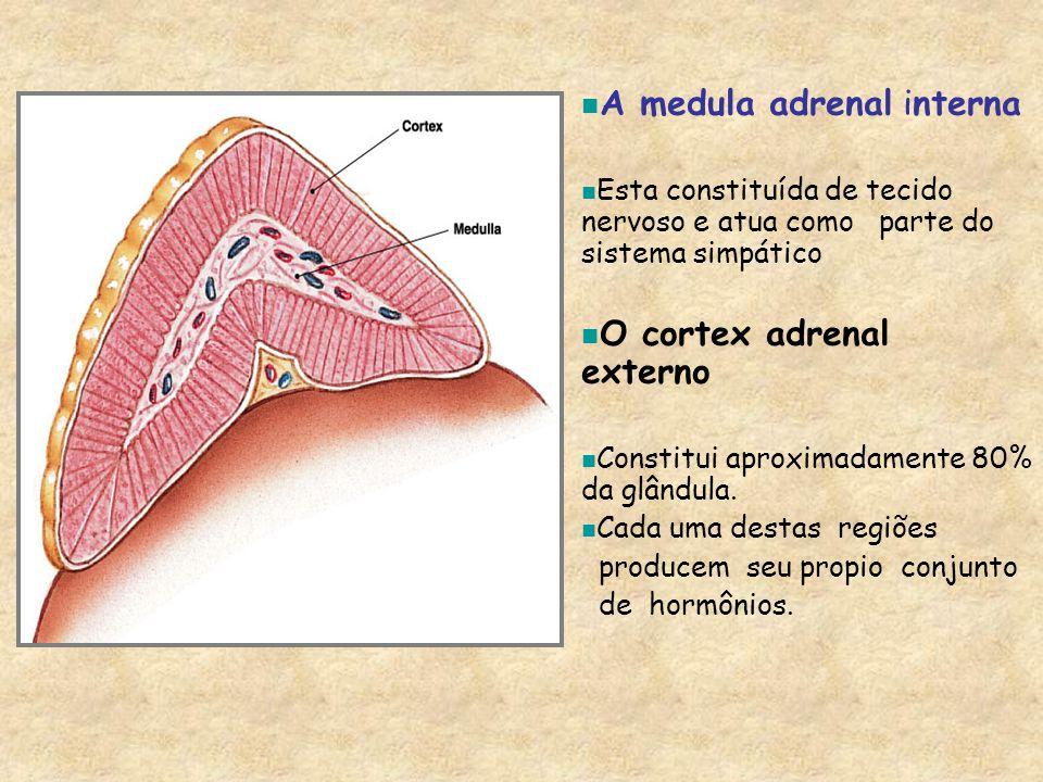 A medula adrenal interna Esta constituída de tecido nervoso e atua como parte do sistema simpático O cortex adrenal externo Constitui aproximadamente 80% da glândula.