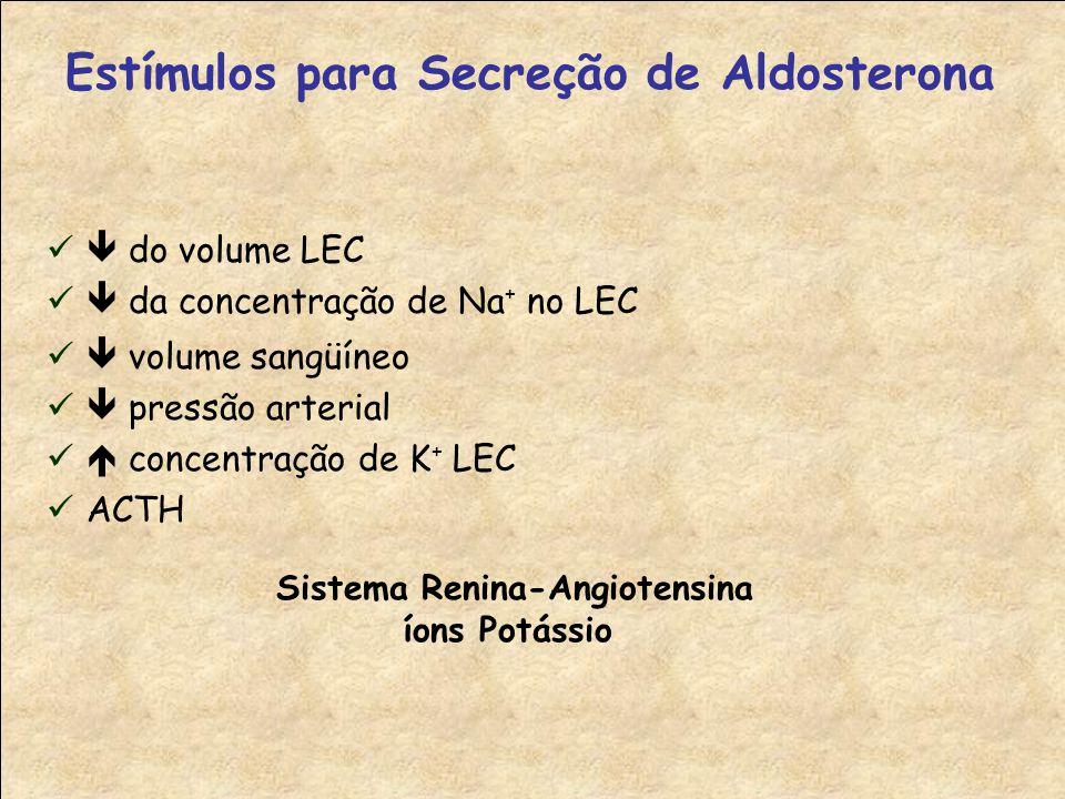  volume sangüíneo  pressão arterial  concentração de K + LEC ACTH Estímulos para Secreção de Aldosterona Sistema Renina-Angiotensina íons Potássio  do volume LEC  da concentração de Na + no LEC
