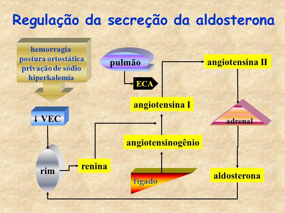 hemorragia postura ortostática privação de sódio hiperkalemia VEC rim renina fígado angiotensinogênio angiotensina I angiotensina II adrenal aldosterona Regulação da secreção da aldosterona pulmão ECA