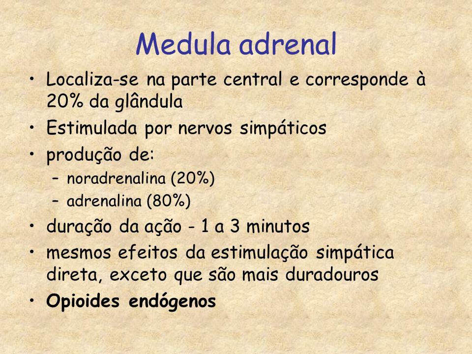 Medula adrenal Localiza-se na parte central e corresponde à 20% da glândula Estimulada por nervos simpáticos produção de: –noradrenalina (20%) –adrenalina (80%) duração da ação - 1 a 3 minutos mesmos efeitos da estimulação simpática direta, exceto que são mais duradouros Opioides endógenos