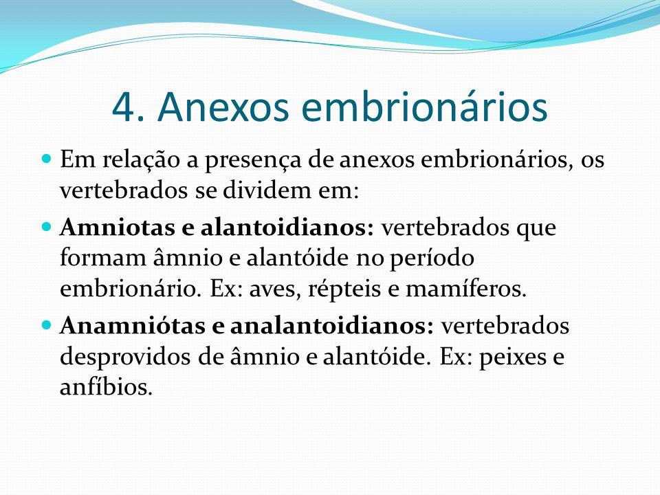 4. Anexos embrionários Em relação a presença de anexos embrionários, os vertebrados se dividem em: Amniotas e alantoidianos: vertebrados que formam âm