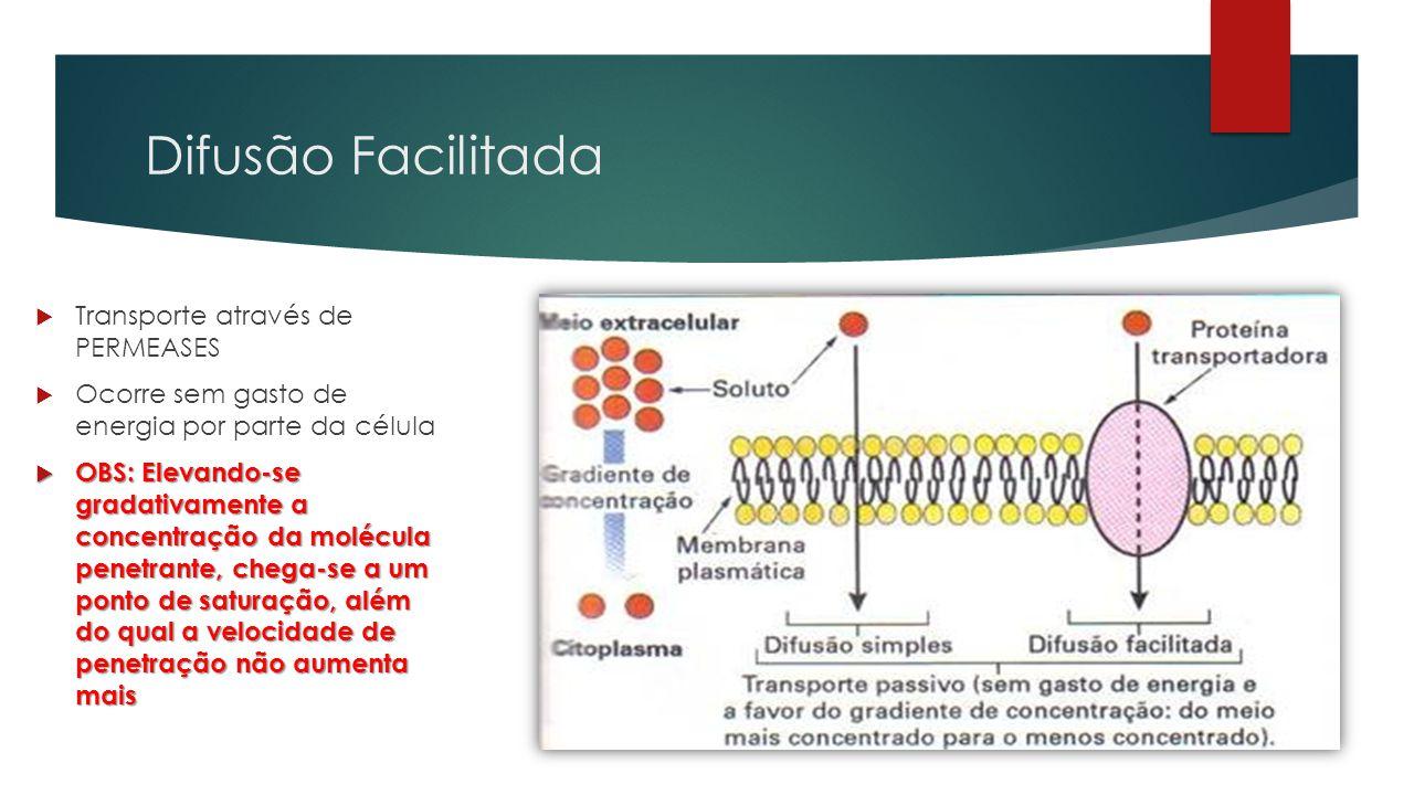 Difusão Facilitada  Transporte através de PERMEASES  Ocorre sem gasto de energia por parte da célula  OBS: Elevando-se gradativamente a concentraçã
