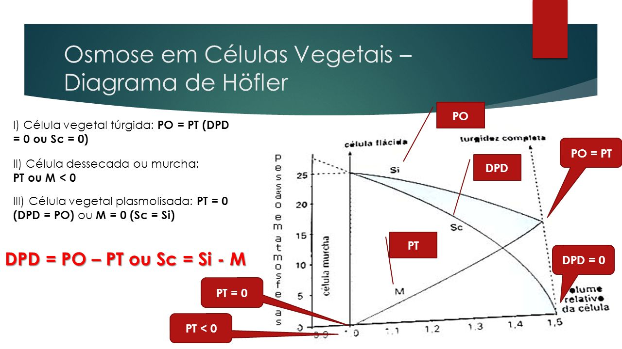 Osmose em Células Vegetais – Diagrama de Höfler PO DPD PT DPD = 0 PT = 0 PT < 0 PO = PT I) Célula vegetal túrgida: PO = PT (DPD = 0 ou Sc = 0) III) Cé