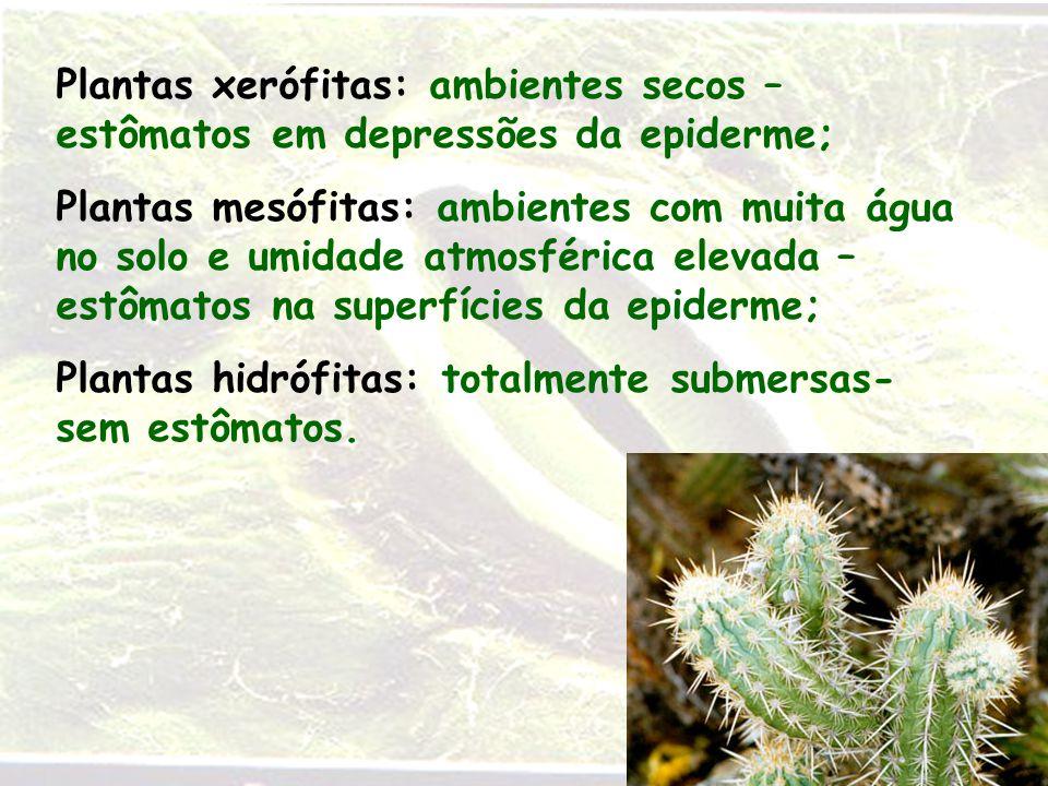 Plantas xerófitas: ambientes secos – estômatos em depressões da epiderme; Plantas mesófitas: ambientes com muita água no solo e umidade atmosférica el