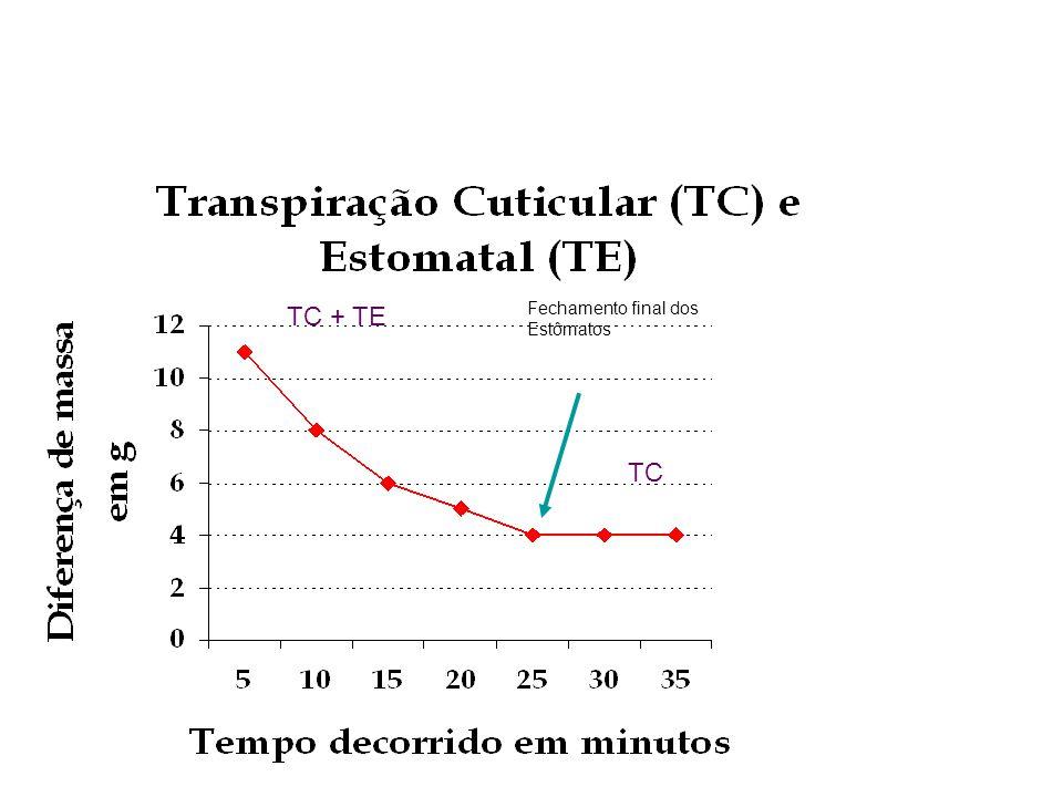 Fechamento final dos Estômatos TC + TE TC