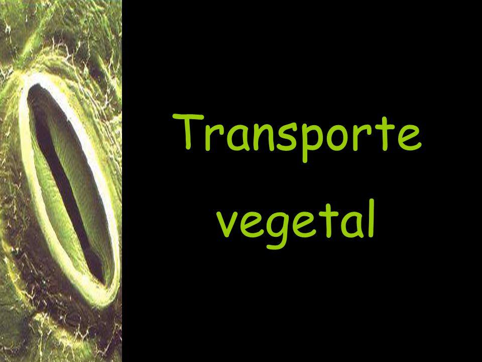 Transporte vegetal