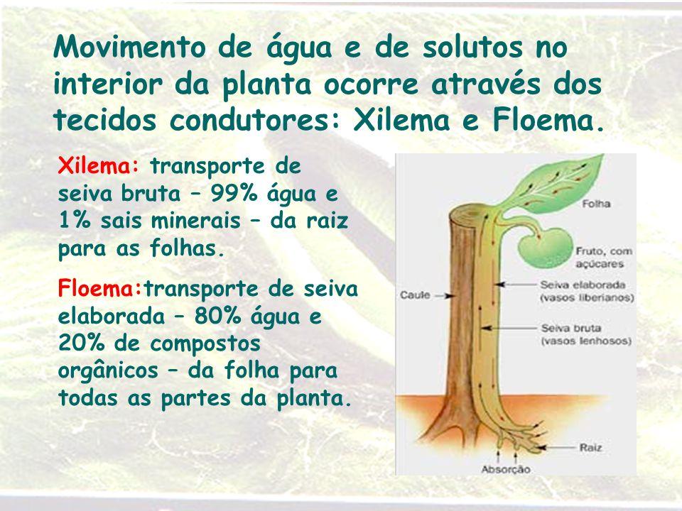 Movimento de água e de solutos no interior da planta ocorre através dos tecidos condutores: Xilema e Floema. Xilema: transporte de seiva bruta – 99% á