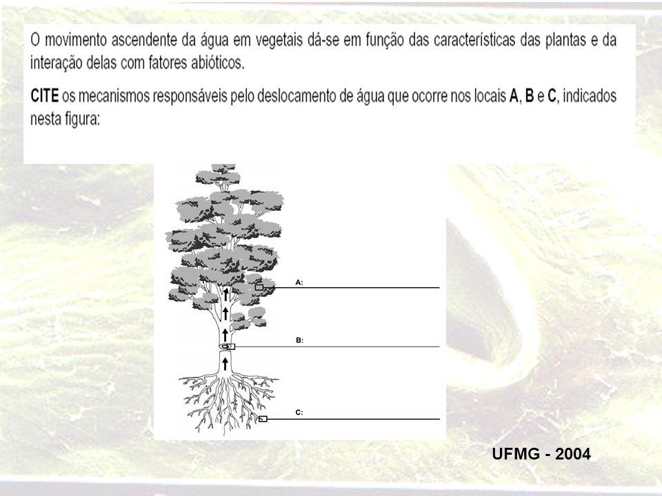 UFMG - 2004