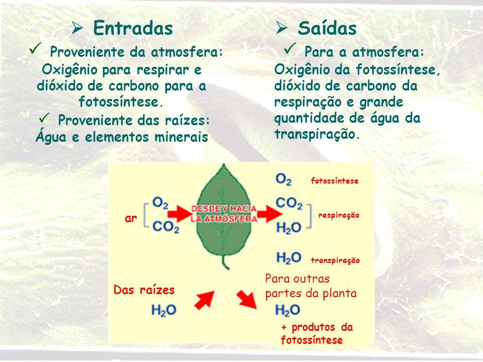  Entradas  Proveniente da atmosfera: Oxigênio para respirar e dióxido de carbono para a fotossíntese.  Proveniente das raízes: Água e elementos min
