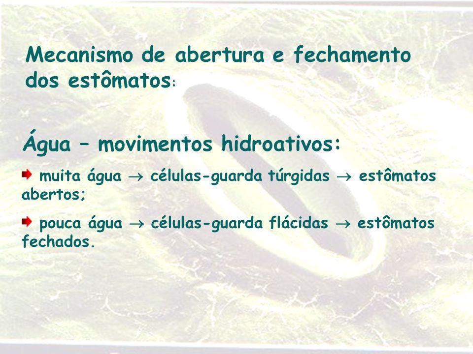Mecanismo de abertura e fechamento dos estômatos : Água – movimentos hidroativos: muita água  células-guarda túrgidas  estômatos abertos; pouca água