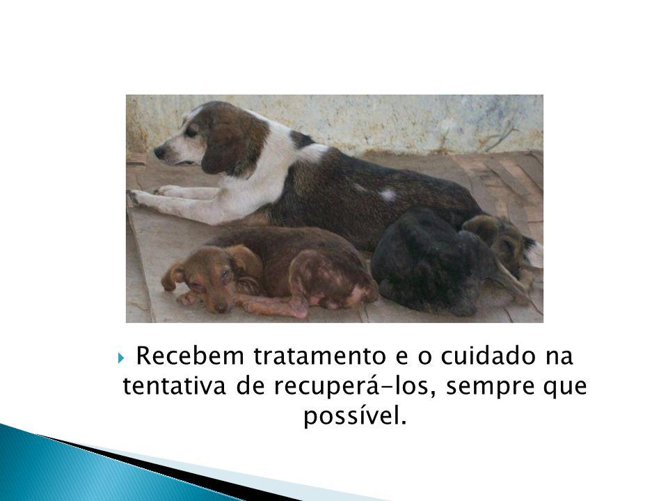  Recebem tratamento e o cuidado na tentativa de recuperá-los, sempre que possível.