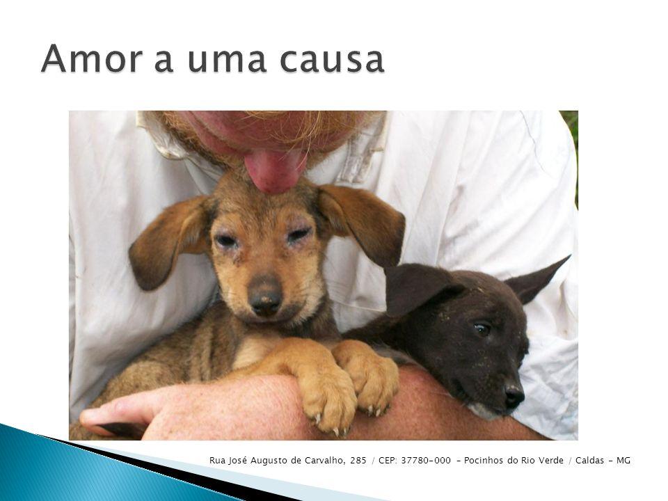  A ONG cuida de animais que são deixados em sua porta, abandonados nas ruas etc.