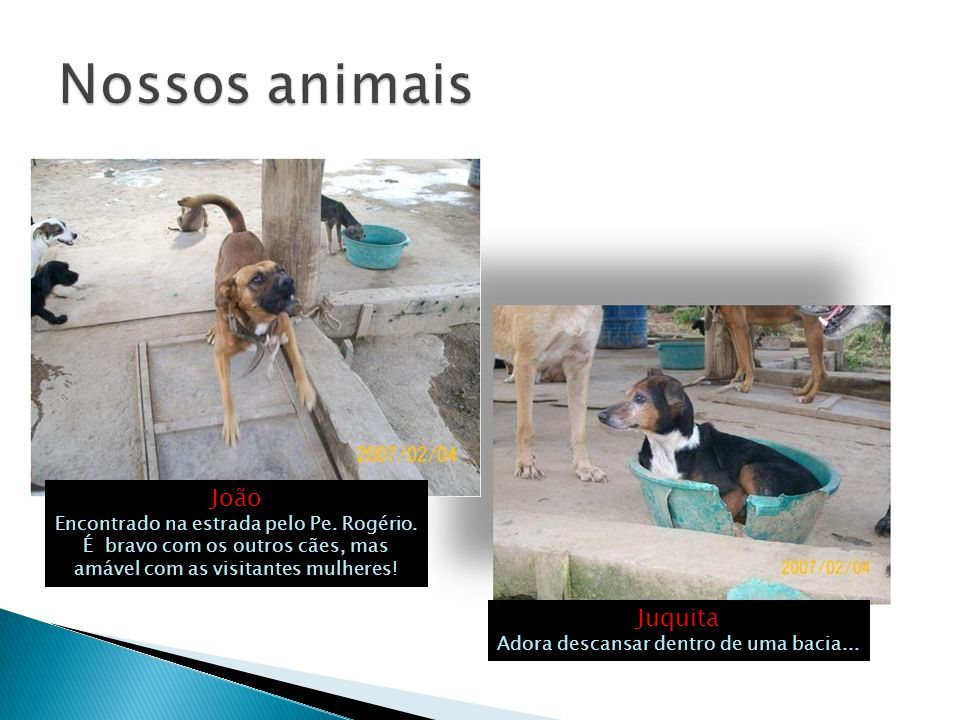  PUC Minas Poços de Caldas: O Curso de Veterinária inicia o trabalho de cadastramento dos animais, tratamento das doenças de pele, cirurgias e castração.