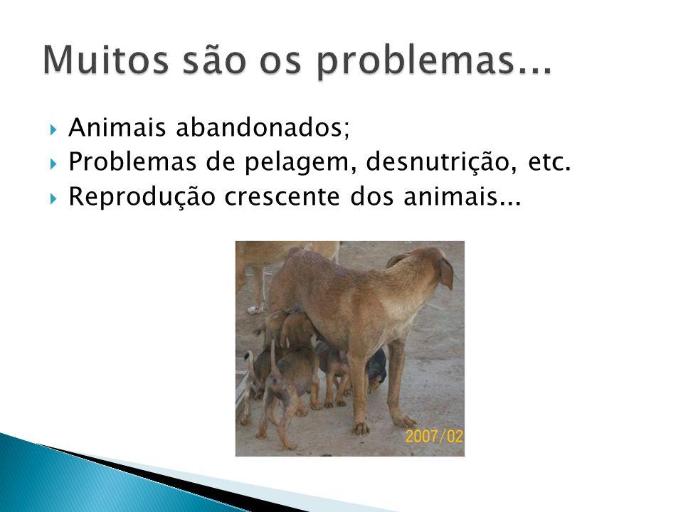  Animais abandonados;  Problemas de pelagem, desnutrição, etc.