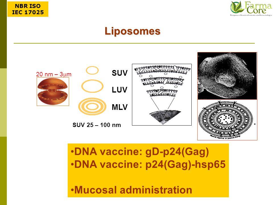 Liposomes SUV LUV MLV SUV LUV MLV SUV 25 – 100 nm 20 nm – 3  m DNA vaccine: gD-p24(Gag) DNA vaccine: p24(Gag)-hsp65 Mucosal administration NBR ISO IE