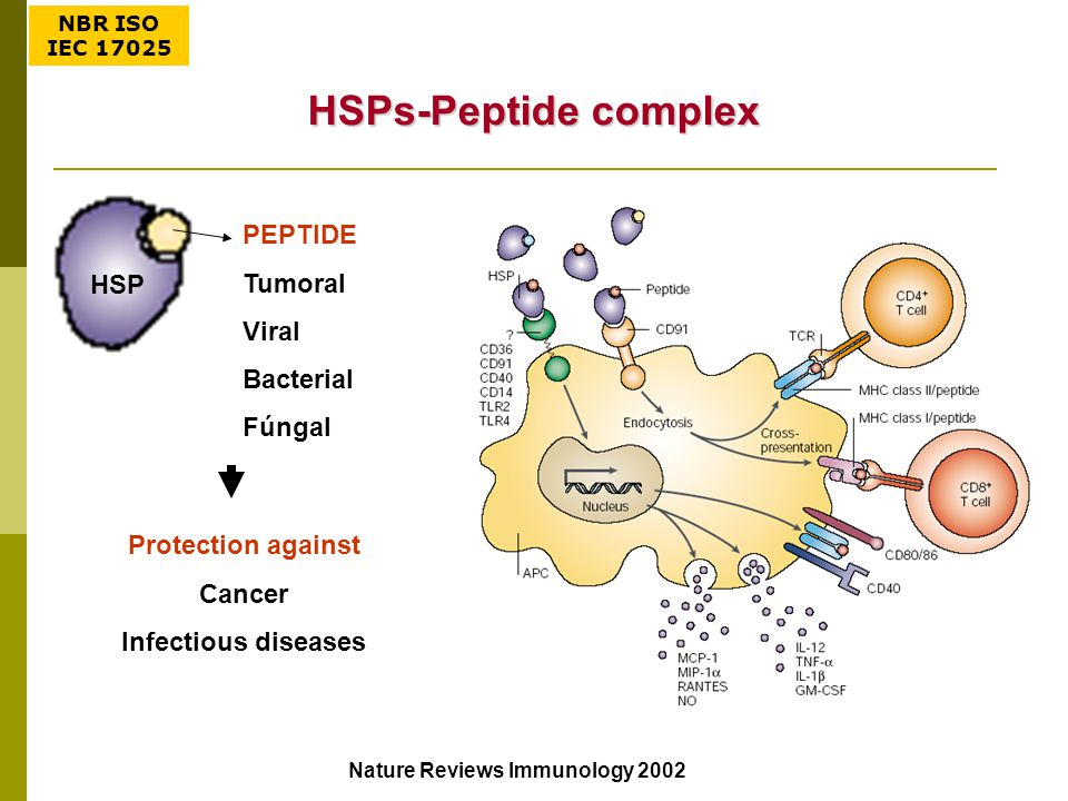 HSPs-Peptide complex PEPTIDE Tumoral Viral Bacterial Fúngal Protection against Cancer Infectious diseases HSP Nature Reviews Immunology 2002 NBR ISO I