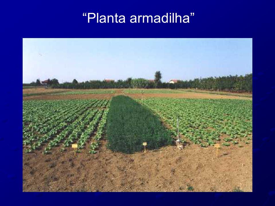 """Planta armadilha"""