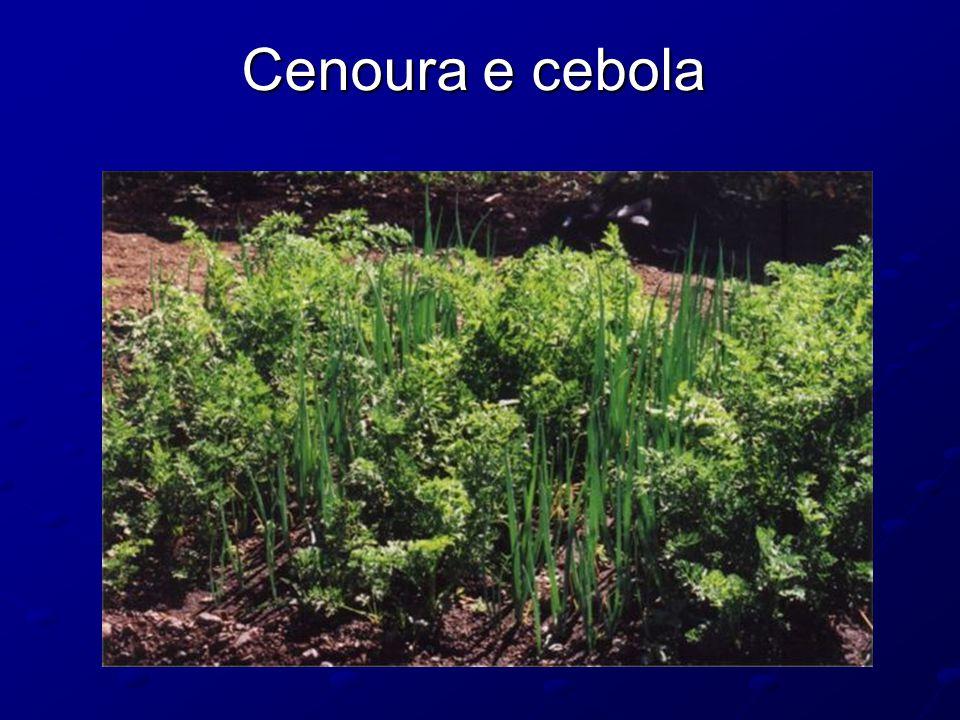 Cenoura e cebola