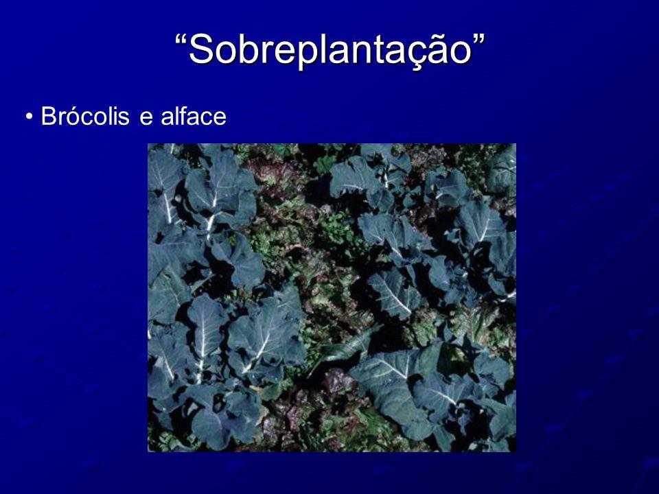 """""""Sobreplantação"""" Brócolis e alface"""