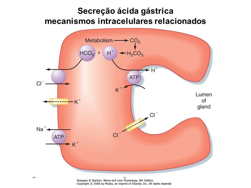 Secreção ácida gástrica mecanismos intracelulares relacionados