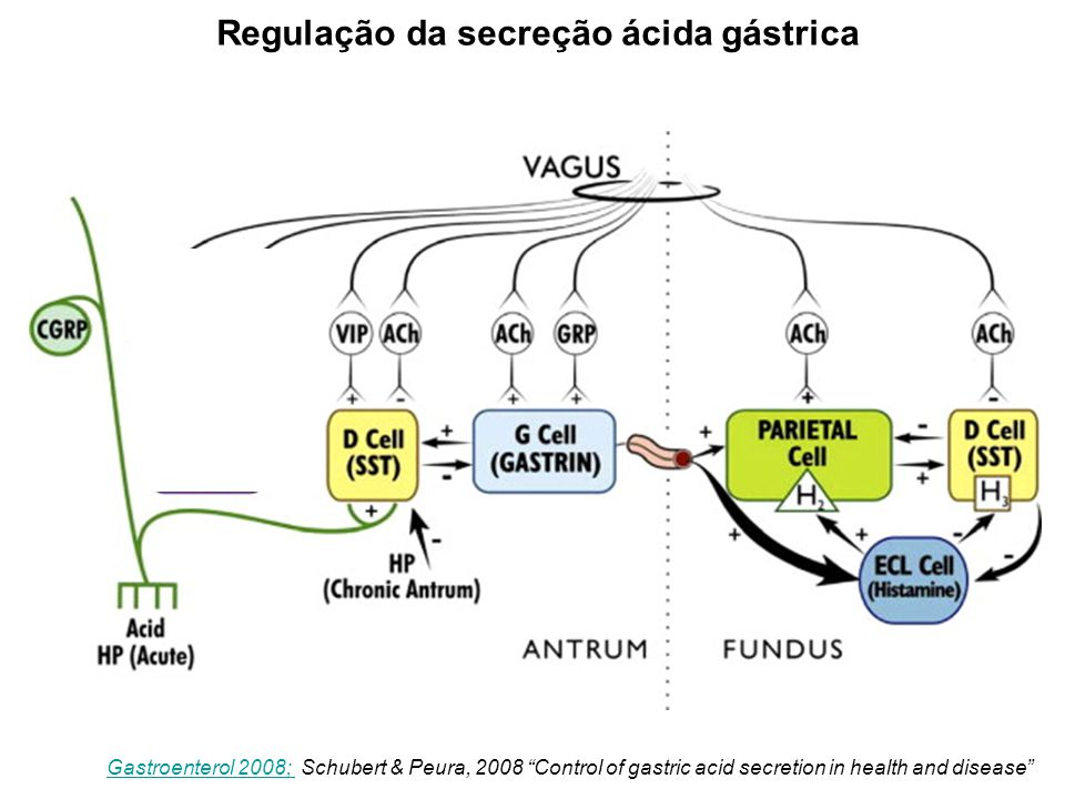 "Figure 4 Gastroenterol 2008; Gastroenterol 2008; Schubert & Peura, 2008 ""Control of gastric acid secretion in health and disease"" Regulação da secreçã"
