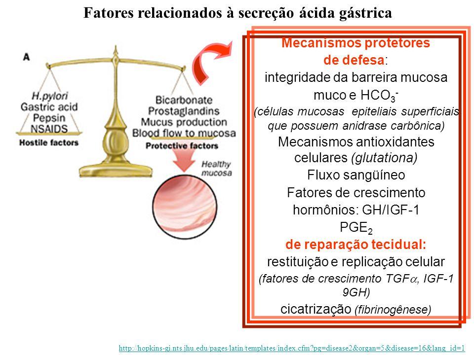 Mecanismos protetores de defesa: integridade da barreira mucosa muco e HCO 3 - (células mucosas epiteliais superficiais que possuem anidrase carbônica