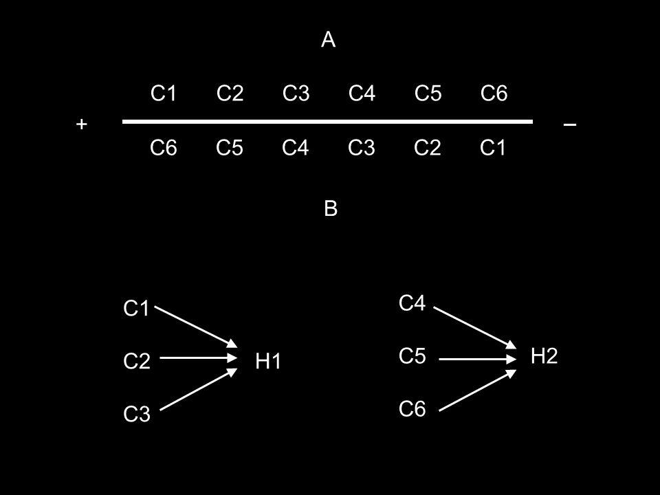 C1C2C3C4C5C6 C6C5C4C3C2C1 + _ C1 C2H1 C3 A B C4 C5H2 C6