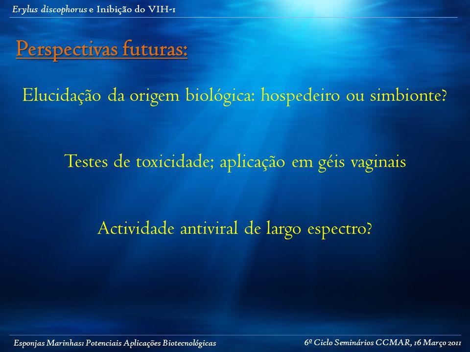 Esponjas Marinhas: Potenciais Aplicações Biotecnológicas Erylus discophorus e Inibição do VIH-1 Elucidação da origem biológica: hospedeiro ou simbionte.