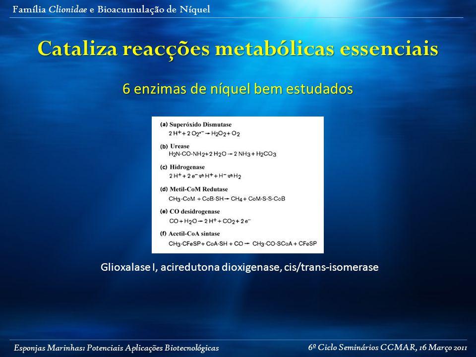 Esponjas Marinhas: Potenciais Aplicações Biotecnológicas Família Clionidae e Bioacumulação de Níquel Cataliza reacções metabólicas essenciais 6 enzima