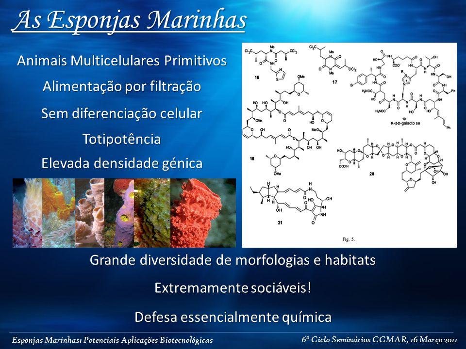 Esponjas Marinhas: Potenciais Aplicações Biotecnológicas As Esponjas Marinhas Animais Multicelulares Primitivos Sem diferenciação celular Totipotência