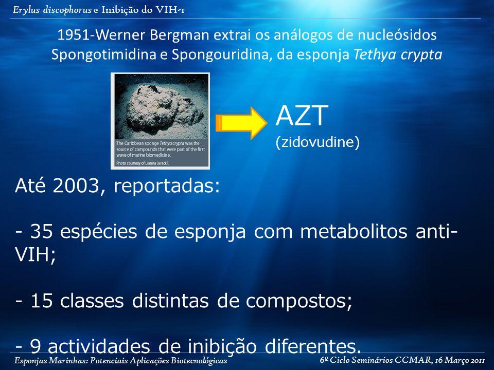 Esponjas Marinhas: Potenciais Aplicações Biotecnológicas Erylus discophorus e Inibição do VIH-1 1951-Werner Bergman extrai os análogos de nucleósidos Spongotimidina e Spongouridina, da esponja Tethya crypta AZT (zidovudine) Até 2003, reportadas: - 35 espécies de esponja com metabolitos anti- VIH; - 15 classes distintas de compostos; - 9 actividades de inibição diferentes.