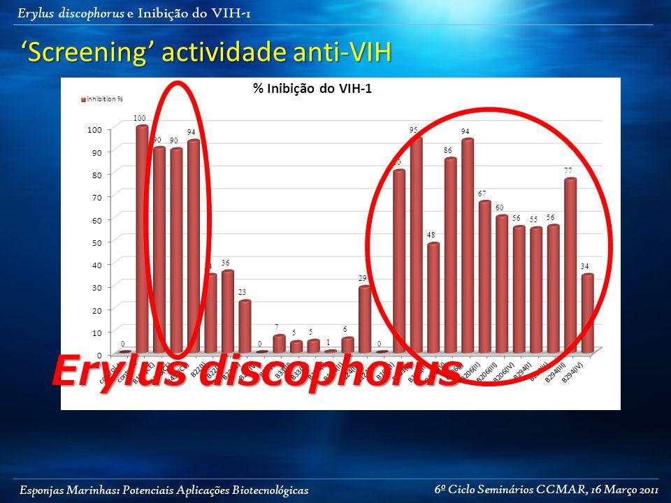 Esponjas Marinhas: Potenciais Aplicações Biotecnológicas Erylus discophorus e Inibição do VIH-1 Erylus discophorus 'Screening' actividade anti-VIH 6º Ciclo Seminários CCMAR, 16 Março 2011