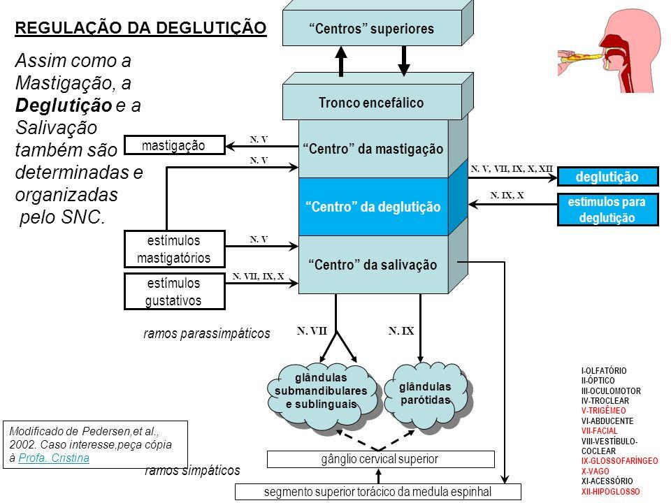A motilidade esofágica ocorre durante a deglutição Veja animação com texto explicativo on-line (Figura 7)animação com texto explicativo on-line Fase e