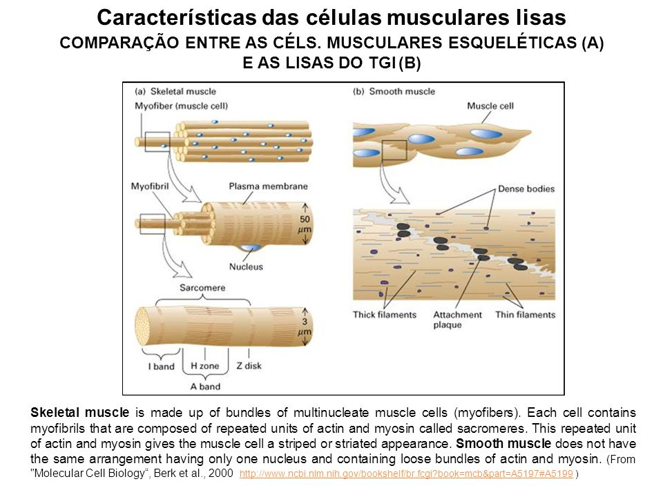 O tubo digestório e suas principais estruturas Modificado de: The Enteric Nervous System: A Second Brain, GERSHON, M. D. - Columbia University, 1999;