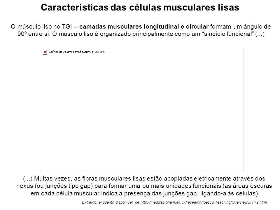 Em (a) está representada uma célula muscular lisa relaxada, com alguns miofilamentos (actina e miosina) e os corpos densos onde estes se ancoram. Quan