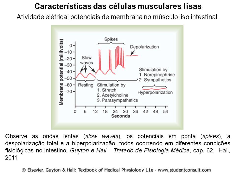 (...) Muitas vezes, as fibras musculares lisas estão acopladas eletricamente através dos nexus (ou junções tipo gap) para formar uma ou mais unidades