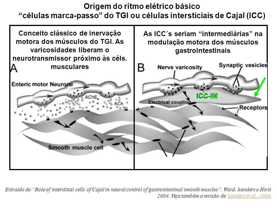 Como estes movimentos são regulados? As células intersticiais de Cajal determinam o ritmo elétrico básico. O Sistema Nervoso Entérico possui o arranjo