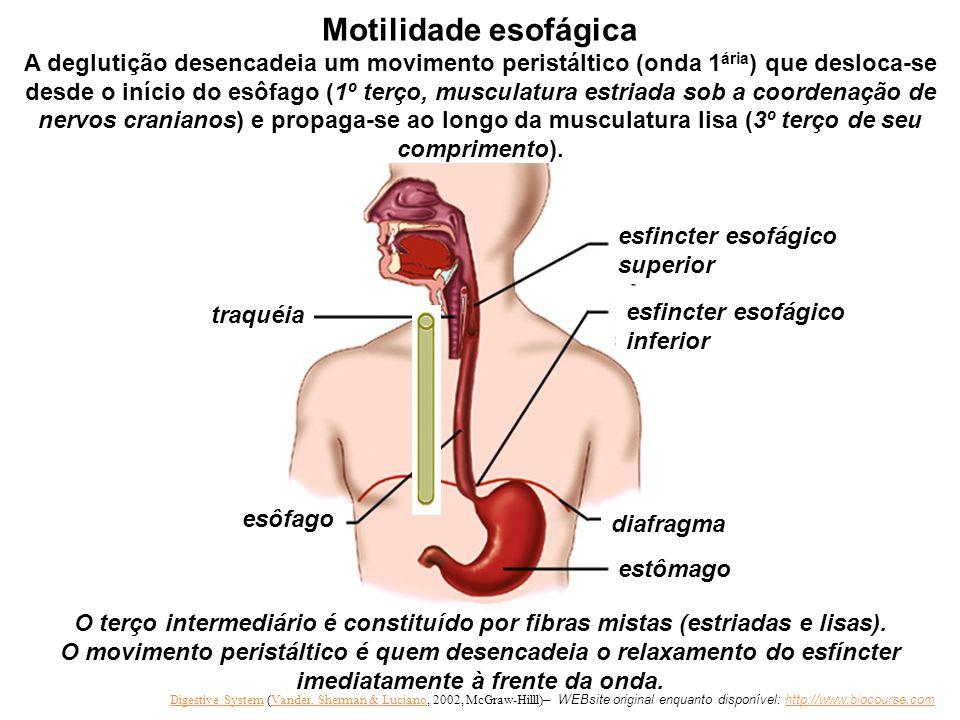Títulos desta apresentação: FISIOLOGIA DO SISTEMA DIGESTÓRIO Movimentos observados no trato gastrointestinal (TGI)  Mastigação e deglutição  Conceit